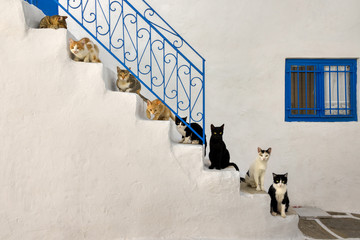 Many cats lined up on a stairway in a Greek alleyway, Cyclades, Greece