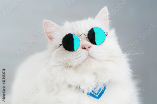 Chat Portrait of highland straight fluffy cat with long hair and round sunglasses. Fashion, style, cool animal concept. Studio photo. White pussycat on gray background