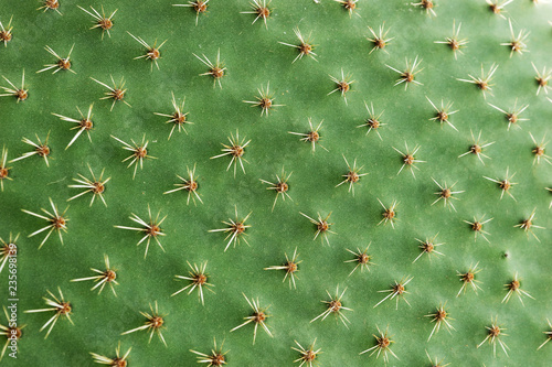 Foto op Canvas Cactus Closeup of spines on cactus, background cactus with spines