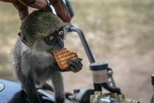 Baby Monkey Cracker