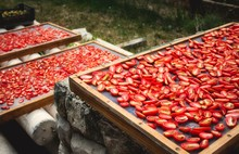 Sundried Tomatoes Drying In Th...