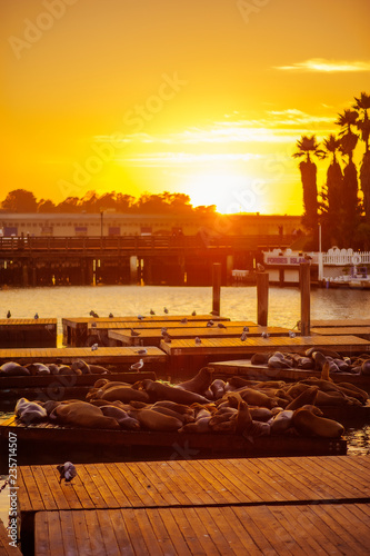 Fotografie, Obraz  sunset in the city with sea lions