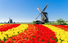 Traditional Dutch Windmill With Reflection At Water, Kinderdijk At Spring Day With Flowers, Netherland