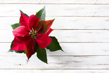 Christmas Poinsettia Flower On White Wooden Table. Top View. Copyspace
