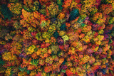 Fototapeta Room - Aerial drone view over autumn forest. Colorful trees in the wood.