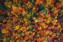 Aerial Drone View Over Autumn ...