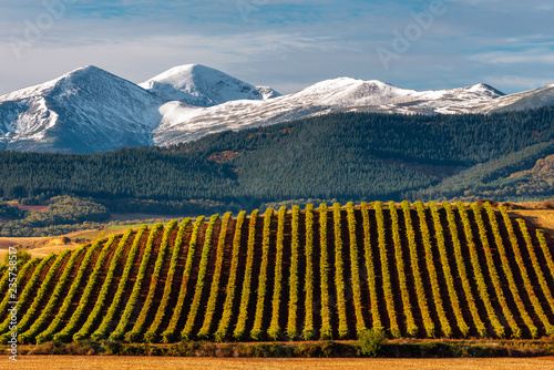 Foto  Vineyards with San Lorenzo mountain as background, La Rioja, Spain