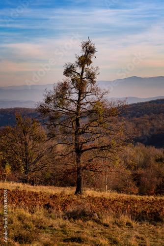 Foto op Canvas Herfst Autumn landscape scene