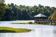 Landscape Of Wooden Boardwalk Gazebo Viewing Deck In Marsh Swamp In Paynes Prairie Preserve State Park In Gainesville, Florida