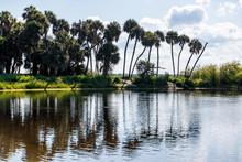 Reflection Of Palm Trees And Deep Hole Famous Alligator Lake Pond In Myakka River State Park, Sarasota, Florida