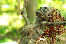 Fantasy Tree Woman, Hamadryad,...