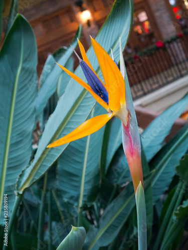 Garden Poster Bird-of-paradise flower Bird of Paradise plant flower