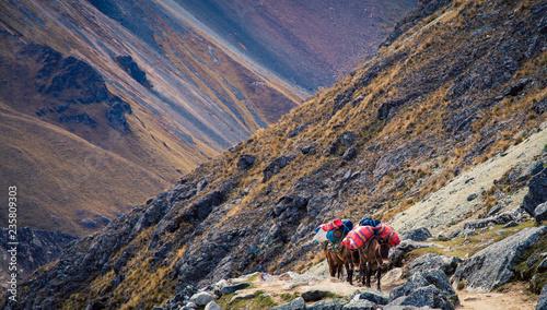 Spoed Foto op Canvas Zuid-Amerika land packing horses in Peru