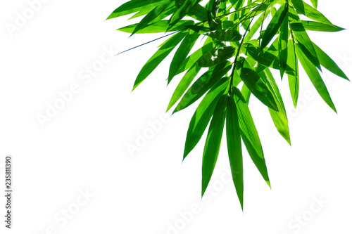 In de dag Bamboo bamboo leaves isolated on white background