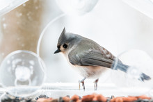 One Cute Tufted Titmouse Perched On Plastic Window Bird Feeder Perch On Suction Cups With Sunflower Seeds, Peanut Nut, Looking Side, Eye During Snow, Snowing, Virginia