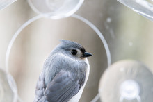 Macro Closeup Of Tufted Titmouse Back Perched On Plastic Window Bird Feeder Perch, Suction Cups With Sunflower Seeds, Peanut Nuts, Looking Side, Eye During Snow, Snowing, Virginia