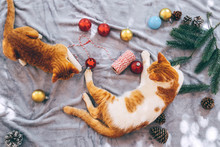 Two Orange Kittens On Carpet In Christmas Holiday With Decoration And Ornament. Domestic Cute Cat In Winter And Sunlight Warm.