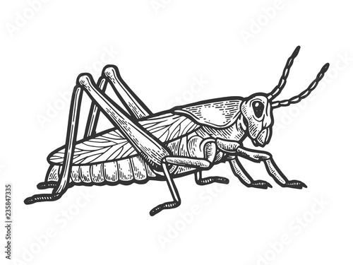 Photo Grasshopper locust insect engraving vector illustration