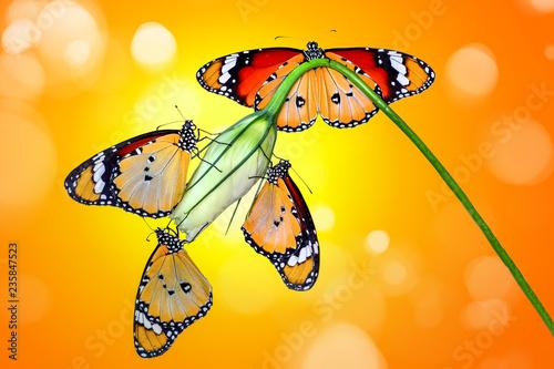 Deurstickers Vlinder Beautiful butterflies sitting on flower