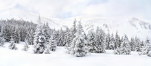Winter Landscape Of Mountains In Fir Tree Forest And Glade In Snow. Carpathian Mountains