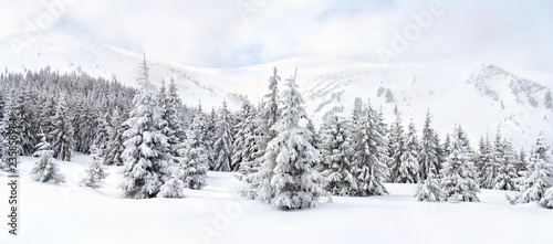 Winter landscape of mountains in fir tree forest and glade in snow. Carpathian mountains - 235858984