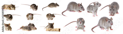 Fotografie, Obraz mice collection