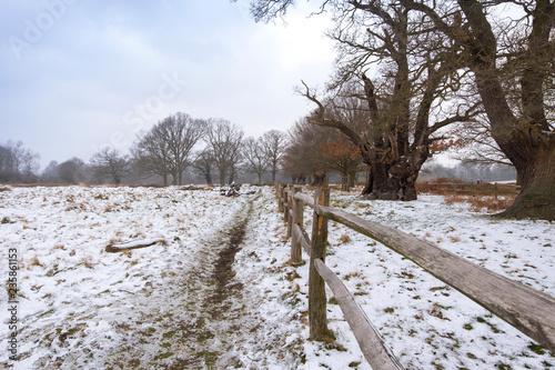Winter landscape in Richmond Park Canvas Print