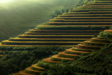 View Of Terraced Rice Field Du...