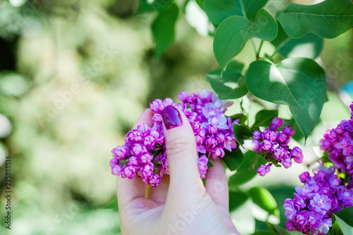 branch with spring lilac flowers in woman hand