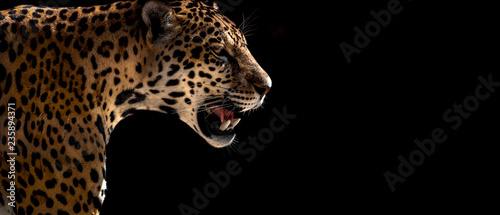Canvas Prints Leopard cheetah, leopard, jaguar
