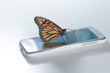 Monarch Butterfly Danaus Plexippus On The White Cell Phone, Clean Energy