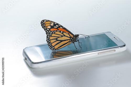 Monarch Butterfly Danaus plexippus on the white cell phone, clean energy Tapéta, Fotótapéta