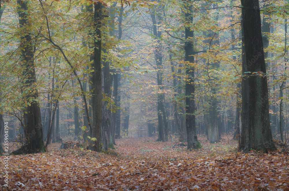 Fototapeta Jesiennie i mgliście