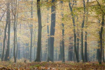 Żółty las