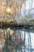Birch Trees Mirrored In Water, Sunset In Autumn, Forest In Back Light, Bern, Switzerland