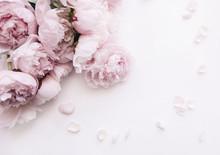 Beautiful, Tender Fresh Blosso...
