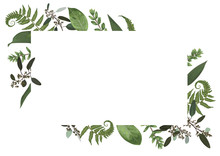 Vector Card Floral Design With Green Watercolor, Eucalyptus, Forest Fern, Herbs, Eucalyptus, Branches Boxwood, Buxus, Botanical Green, Decorative Horizontal Frame, Square