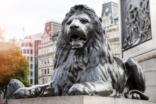 Lion At Trafalgar Square Londo...