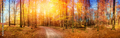 fototapeta na drzwi i meble Fall landscape with forest road in orange tones