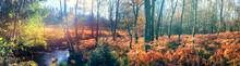 Panoramic Autumn Landscape Wit...
