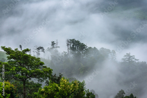 Poster Olive Beautiful morning panorama of forest covered by low clouds. Colored sunrise in forested mountain slope.