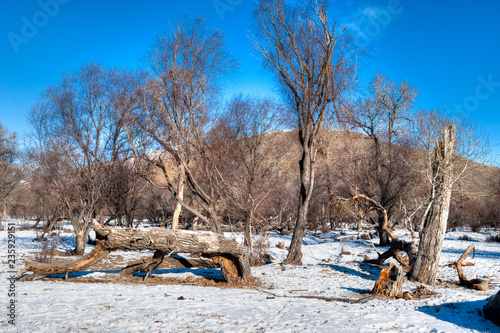 Foto op Canvas Asia land Winterlandschaft in der Mongolei