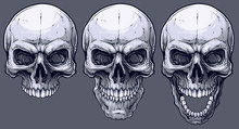 Detailed Graphic Realistic Cool Black And White Human Skulls. On Gray Background. Vector Icon Set.