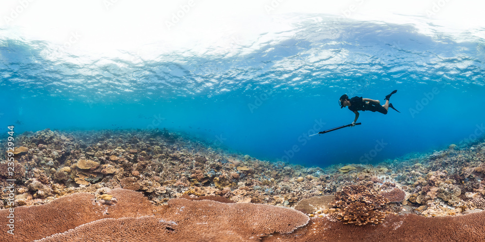 Fototapety, obrazy: 360 of spearfisher on reef