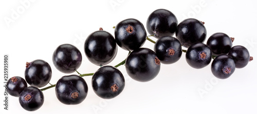 Fotografiet  SPRIG OF BLACKCURRANTS