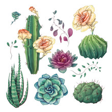 Hand Drawn Colorful Cactuses A...