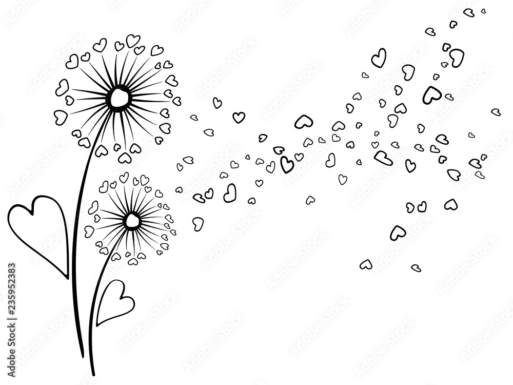 Fototapety, obrazy: Black on white vector dandelion herbs, meadow flowers illustration. Floral background design with dandelion blowing plant. Flowers with heart shaped feather flying. Meadow blossom on white.
