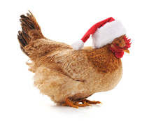 Chicken In A Christmas Hat.
