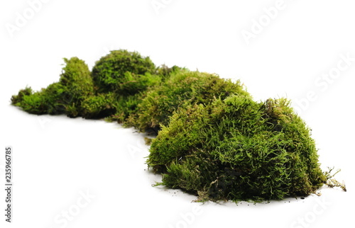 Photo Stands Bonsai Green moss with grass isolated on white background