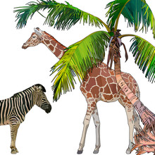 Background With Zebra, Giraffe And Palm Tree